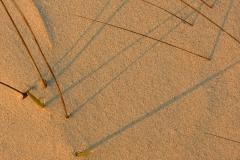 Sandhalme01